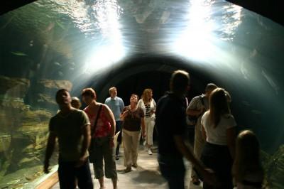 Unterwassertunnel im Ozeaneum