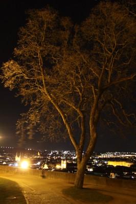 Baum auf dem Festungsgelände