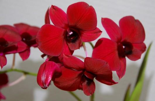 In meinen Händen wär die Orchidee längst eingegangen....