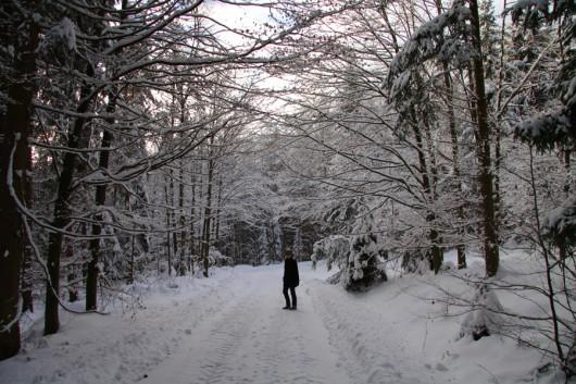 Nicht weit von Zuhause im verschneiten Wald.