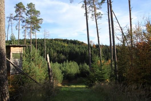 Etwas oberhalb des Tals auf einer Anhöhe Richtung Hohenberg.