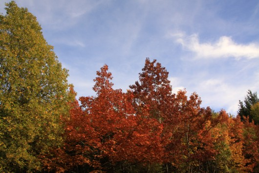 Wenn die Blätter an den Bäumen so prächtig leuchten...
