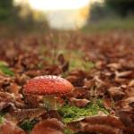 Herbstspaziergang auf dem Albuch