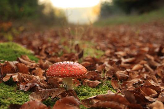 Ein einsamer Pilz am Wegesrand.