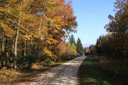 Im Wald auf der Albuch-Fläche.