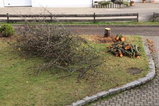 November 2012 - der Kirschbaum ist nicht mehr!