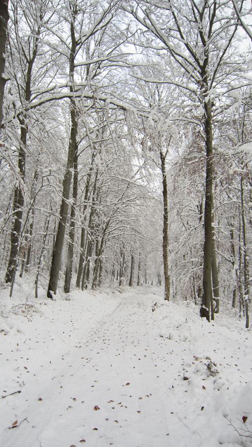 Mitten im verschneiten menschenleeren Wald.