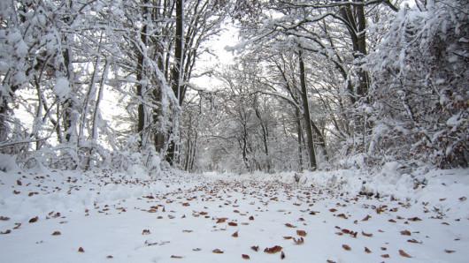 Einer der unzähligen Waldwege durch das Winterwunderland.