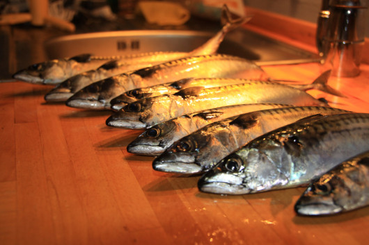 Unsere Fischfänge vom dritten Tag.
