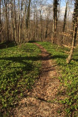 Fußweg runter ins Tal.