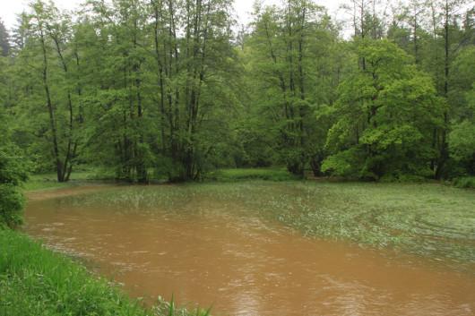 Vor ein paar Stunden muss das Wasser noch höher gestanden haben!