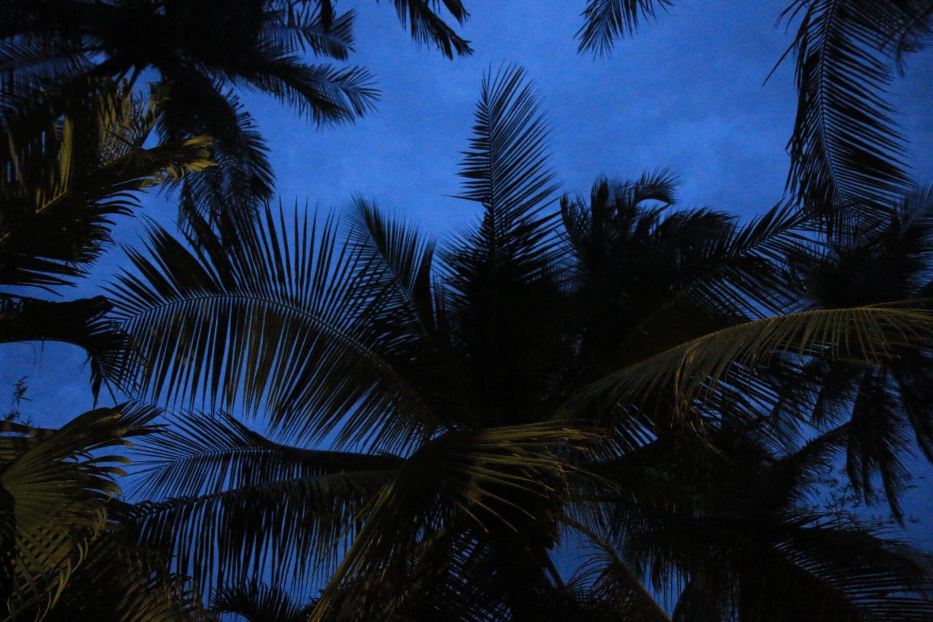 Mein Fensterausblick - der Blick in die Palmenwipel.