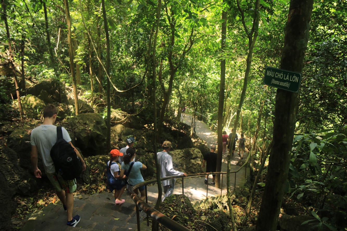 Und schließlich durch den feuchten Tropenwald wieder hinunter zum Parkplatz.