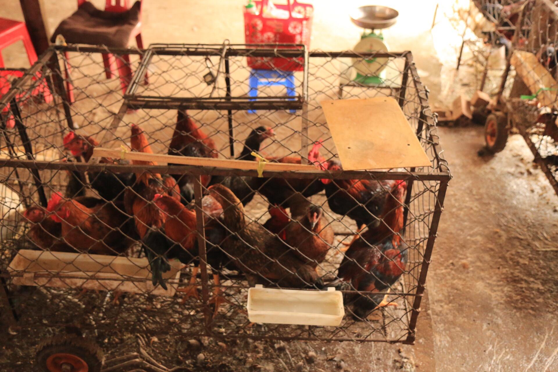 Und noch frischere Hühnchen!
