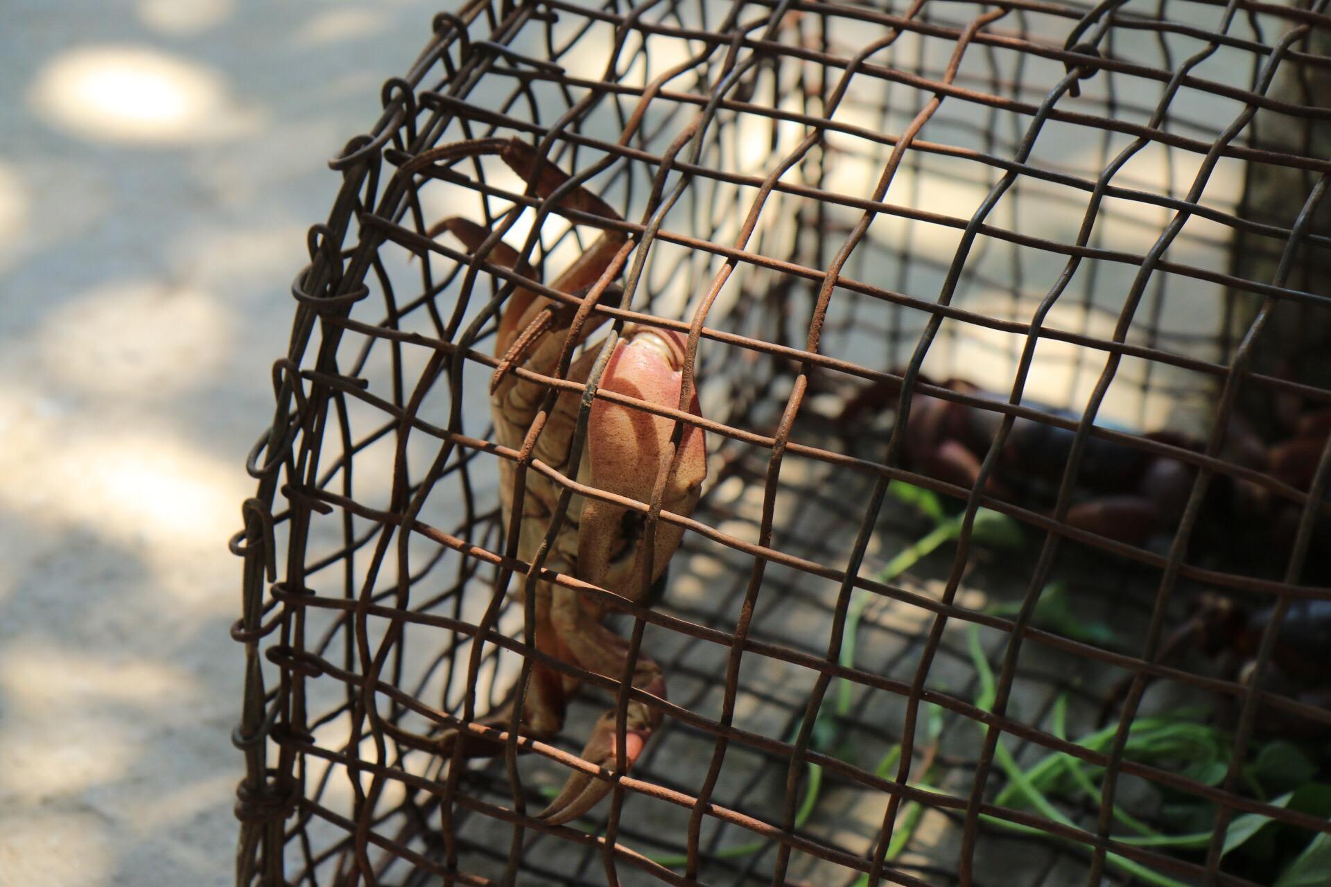 Wer wollte, konnte sich hier ein besonders frische Krabbe kaufen.