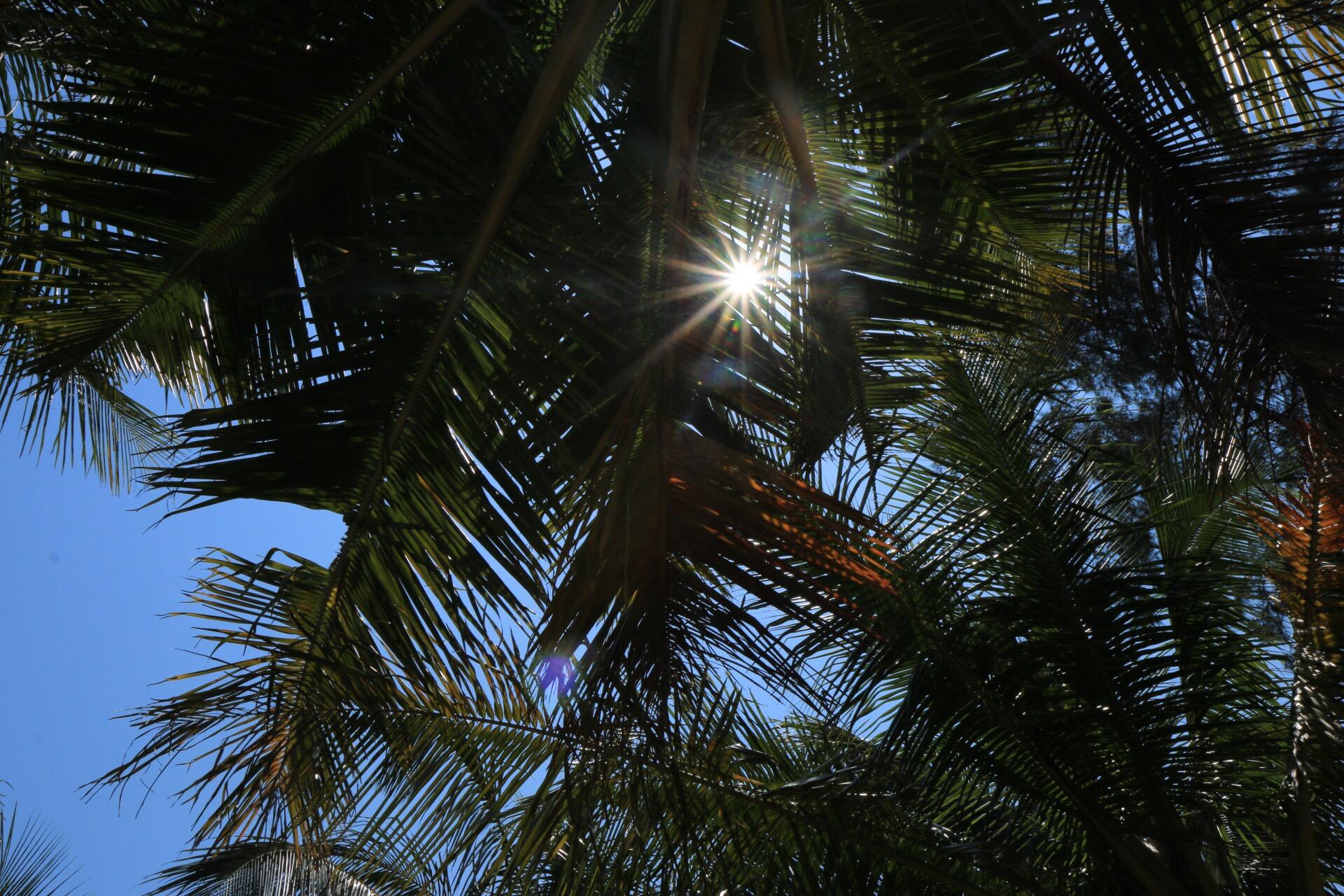Unter diesen Palmen durften wir dann auf die Rückfahrt warten.