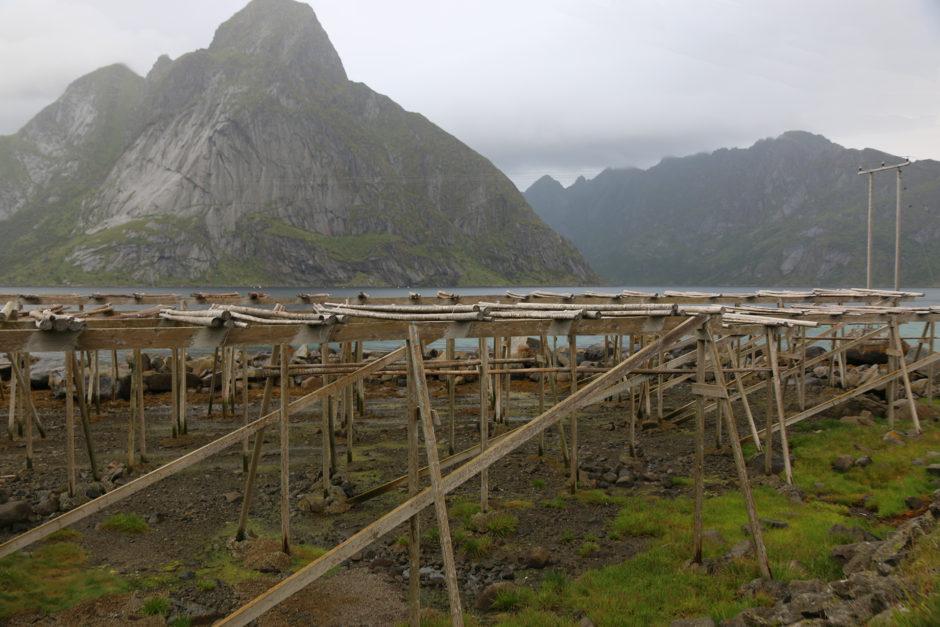Und könnt ihr mir noch erklären, wofür diese Holzgerüste gut sind? Hab ich überall auf den Lofoten gesehen.