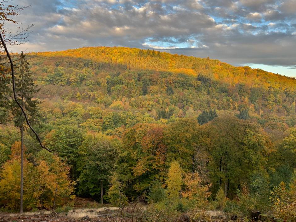 Das Foto zeigt den bunten Taunuswald in der Nähe von Bad Schwalbach am 3. November.