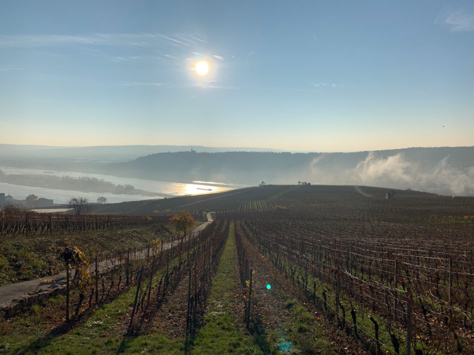 Am 17. November gab der Herbst nochmal alles! Im Hintergrund sieht man die letzten Nebelschwaden über dem Rhein bei Rüdesheim.