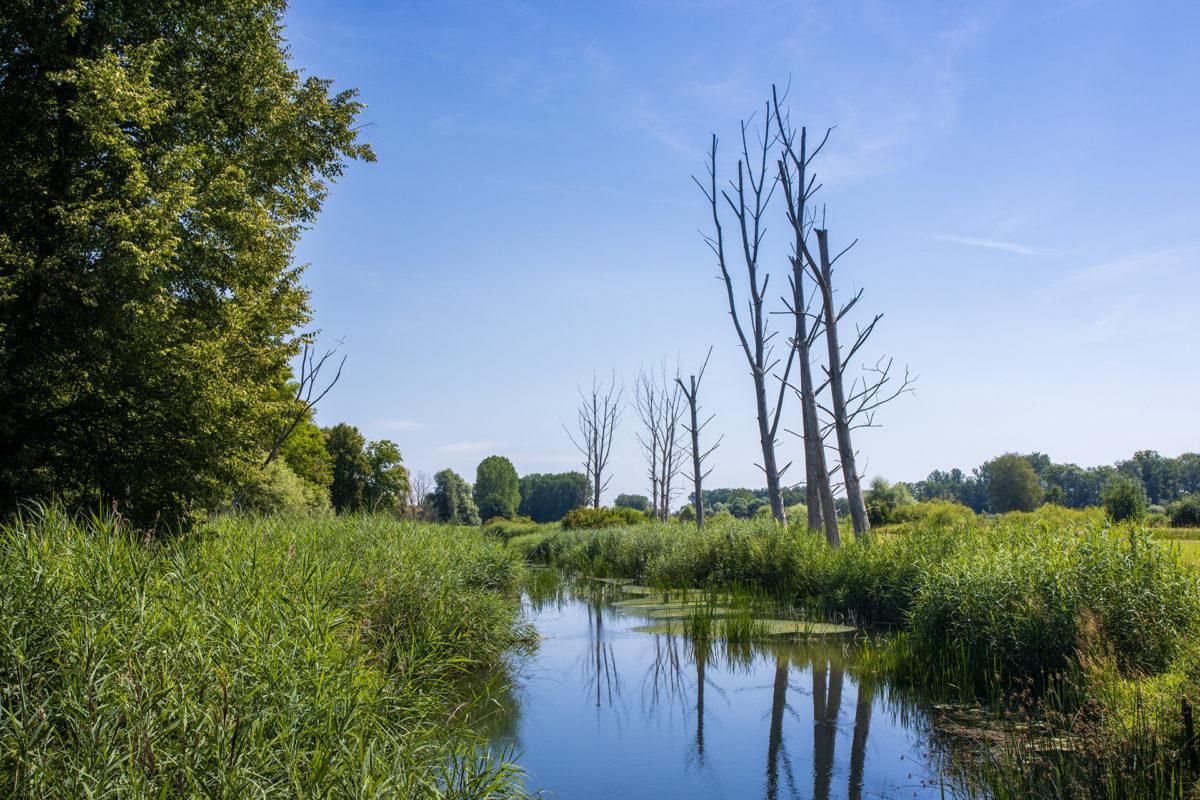 Tote Bäume, die aber trotzdem stehen bleiben durften.