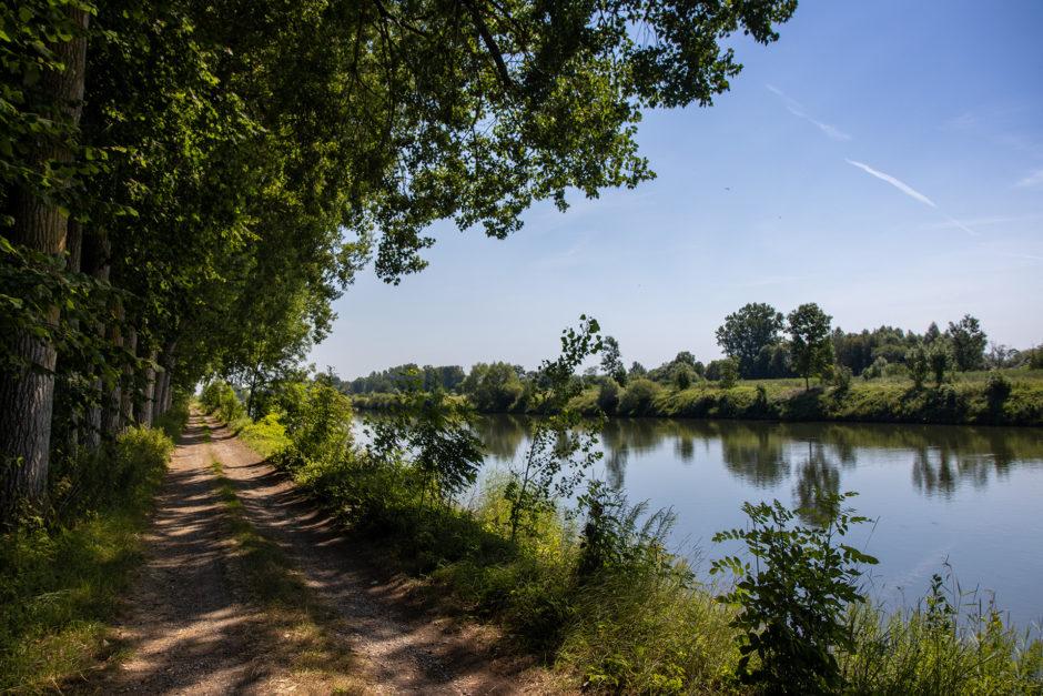 DonAUwald-Weg - immer entlang der Donau.