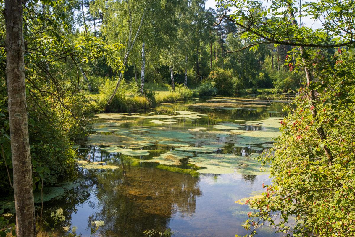 Wohin man blickt: nur Wald und Wasser. Auwald eben.