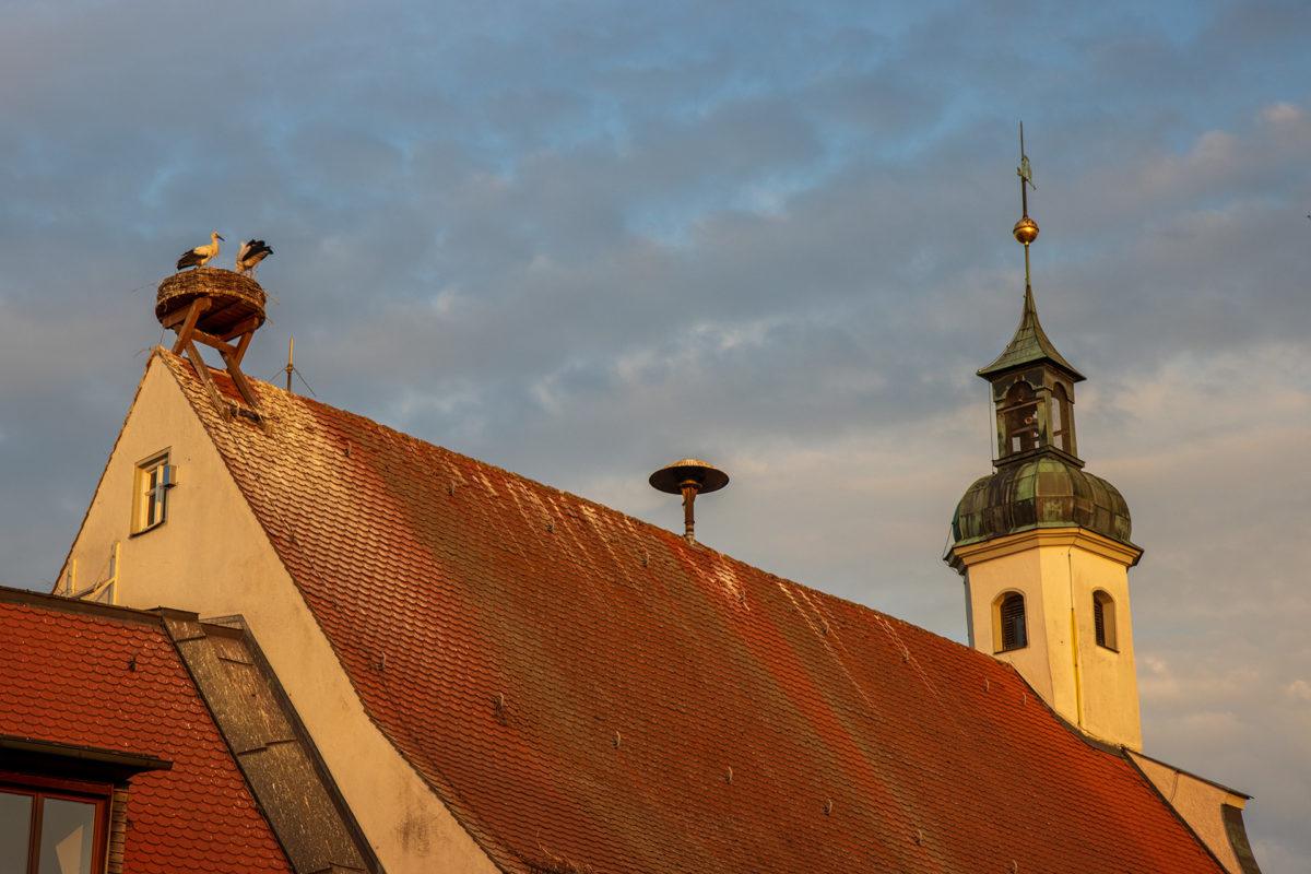 In Gundelfingen gab es auf vielen Dächern Storchennester.