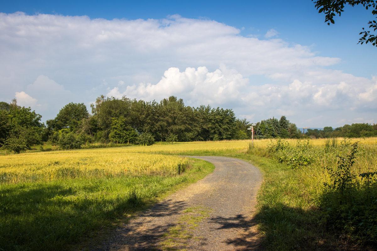 Eine kurze Passage über offenes Gelände, gleich danach ging es wieder in den Wald.
