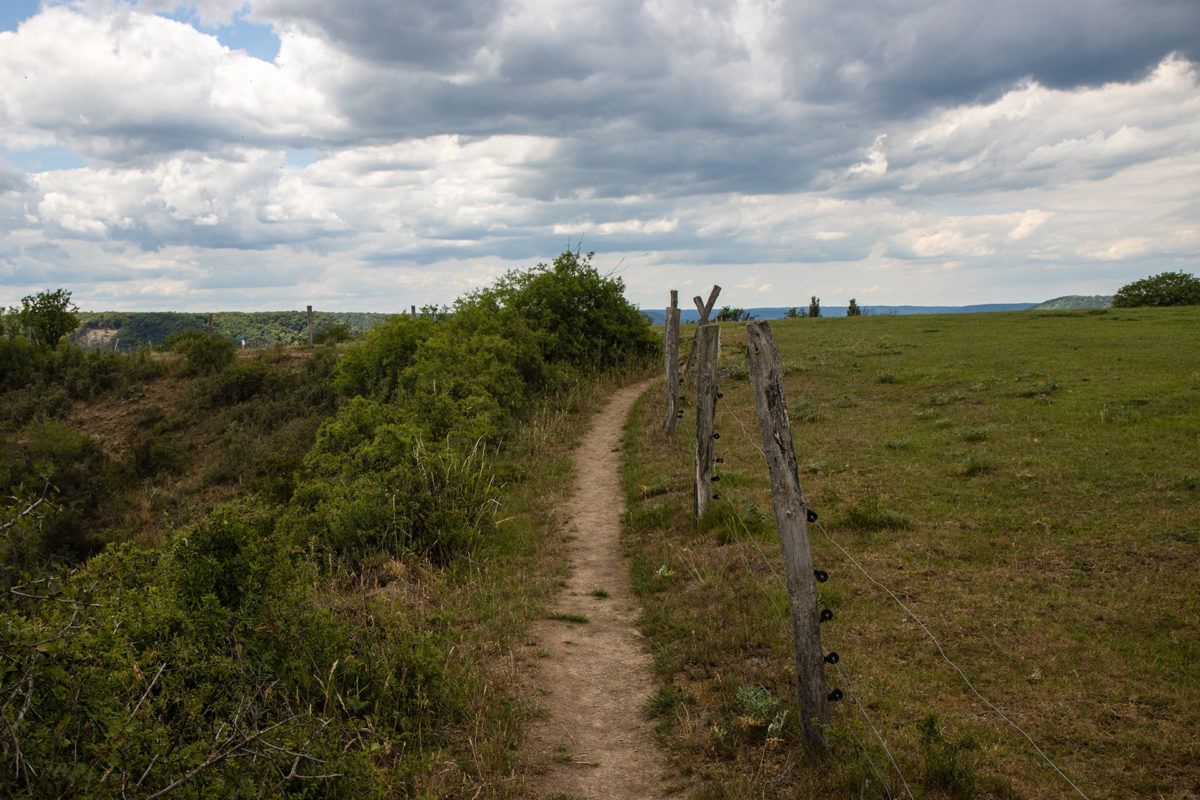Links der Abgrund, rechts eine Koppel, dazwischen der Rheinsteig.