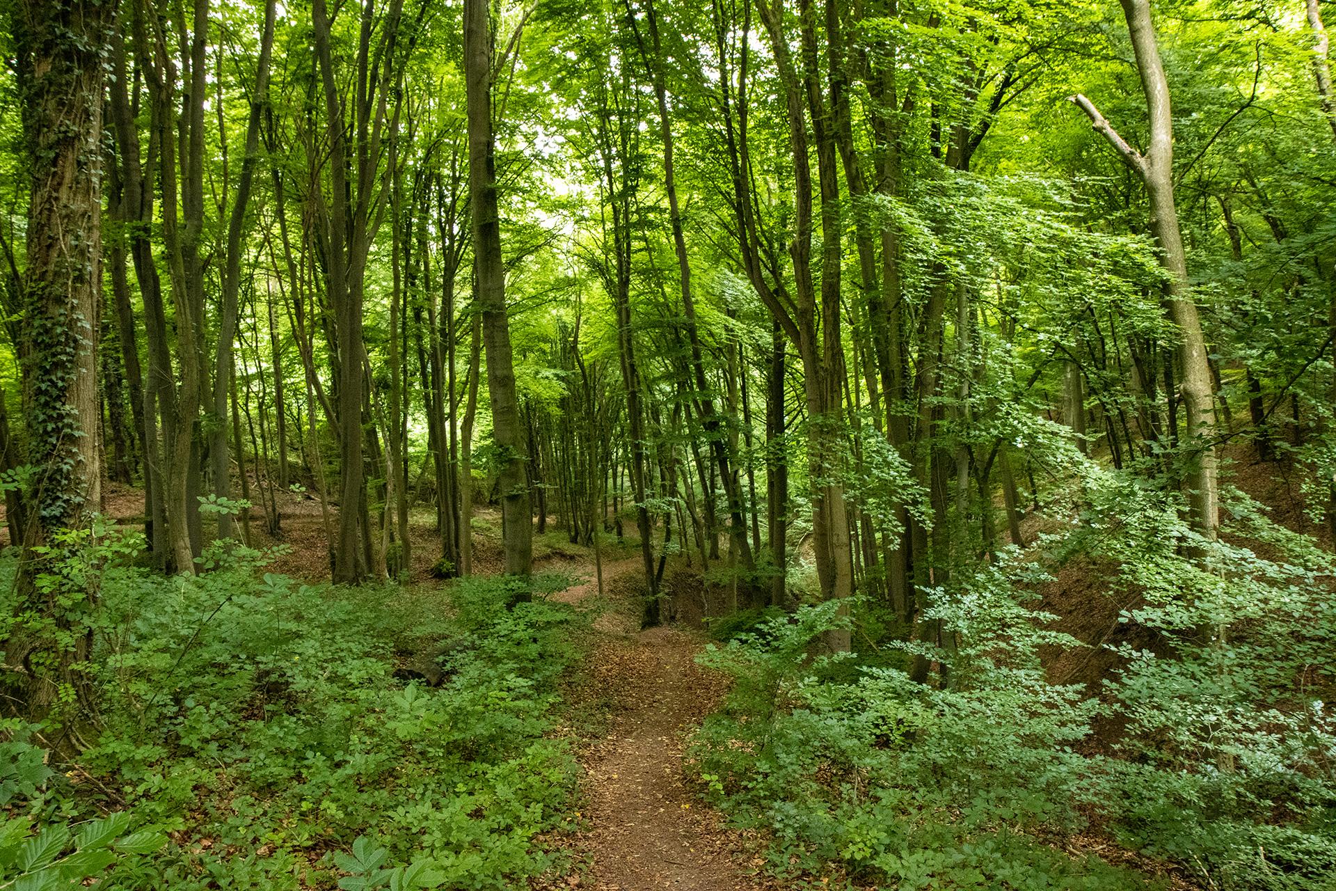 Wieder ein verwunschener Abschnitt durch einen Waldabschnitt.