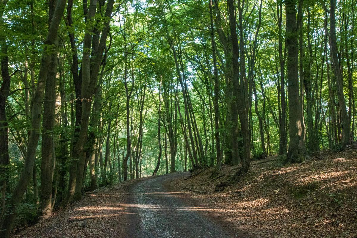 Immer nur bergauf. Aber der Wald war dafür wieder wunderbar.