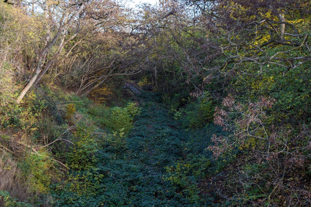 Zugewucherter Streckenabschnitt von einer Brücke aus gesehen.