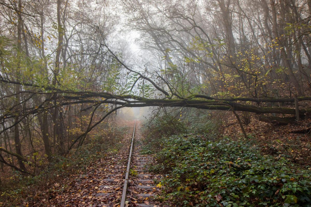 Ein Baum quer über der Strecke unmittelbar nachdem die Aartalbahn das bebaute Gebiet verlassen hat.