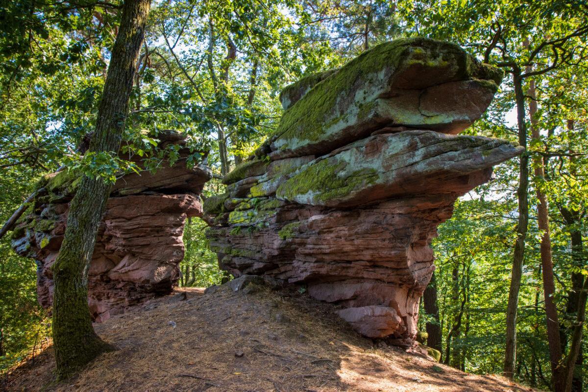 Kleinere Buntsandsteinfelsen fand man fast überall im Wald rund um Annweiler.